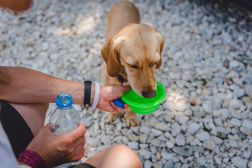 how to cool down a dog water