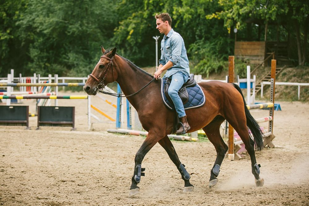 how to exercise your horse and manage weight
