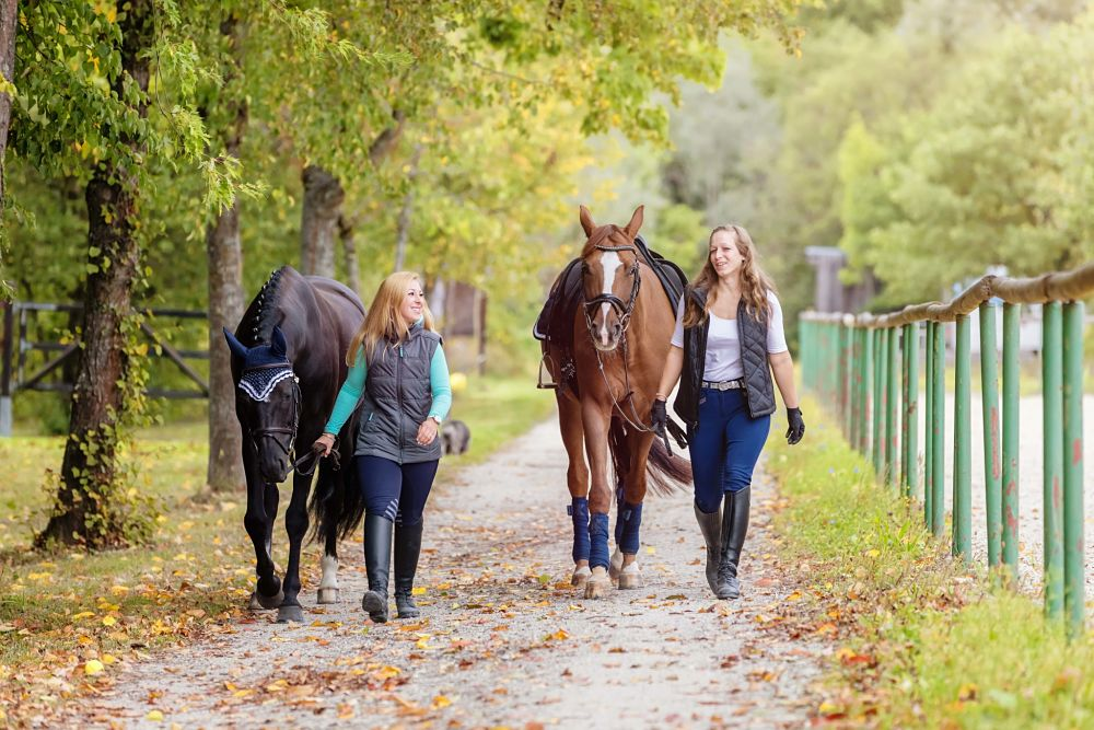 how to exercise your horse and manage weight walking