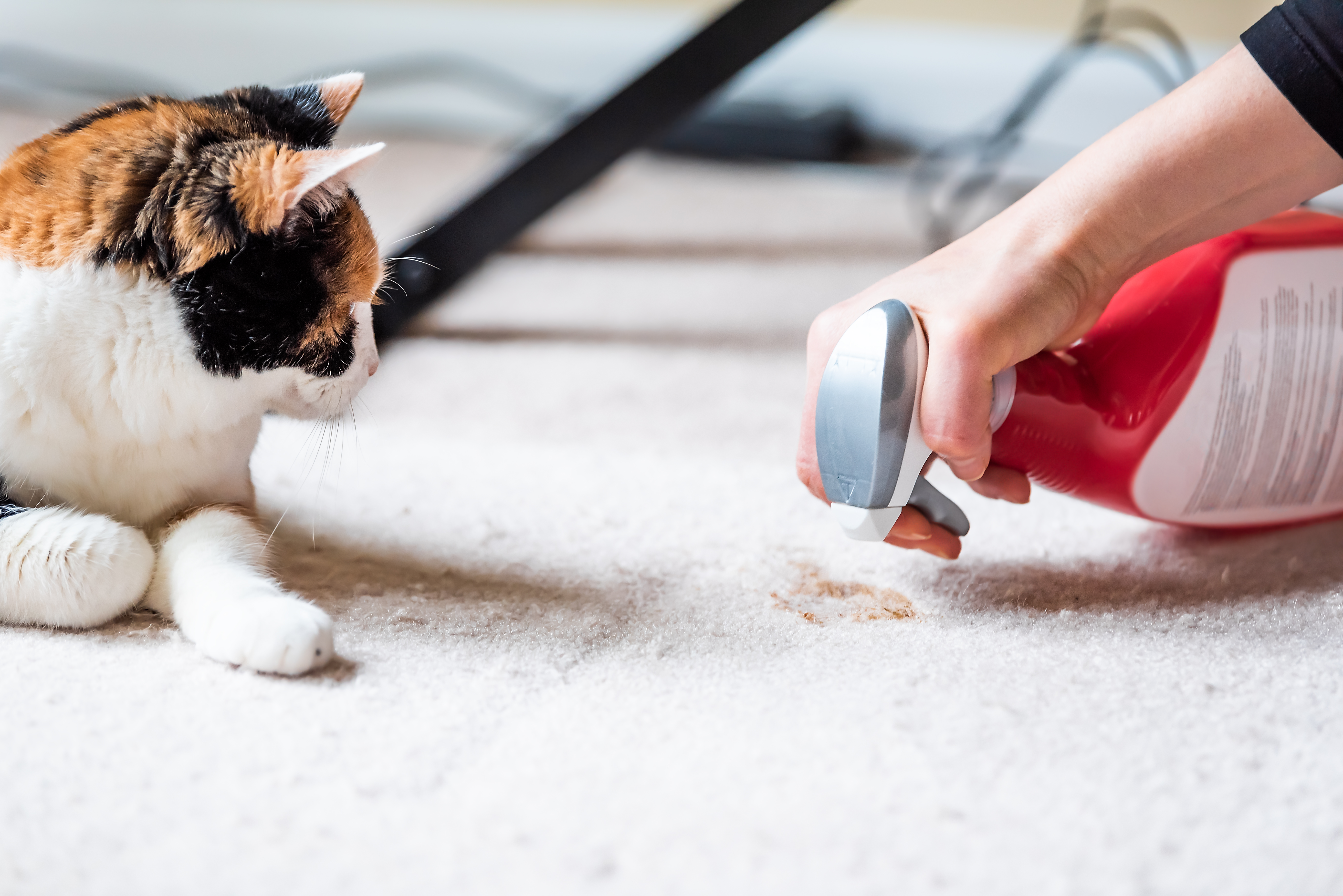 how to potty train a cat deal with accidents
