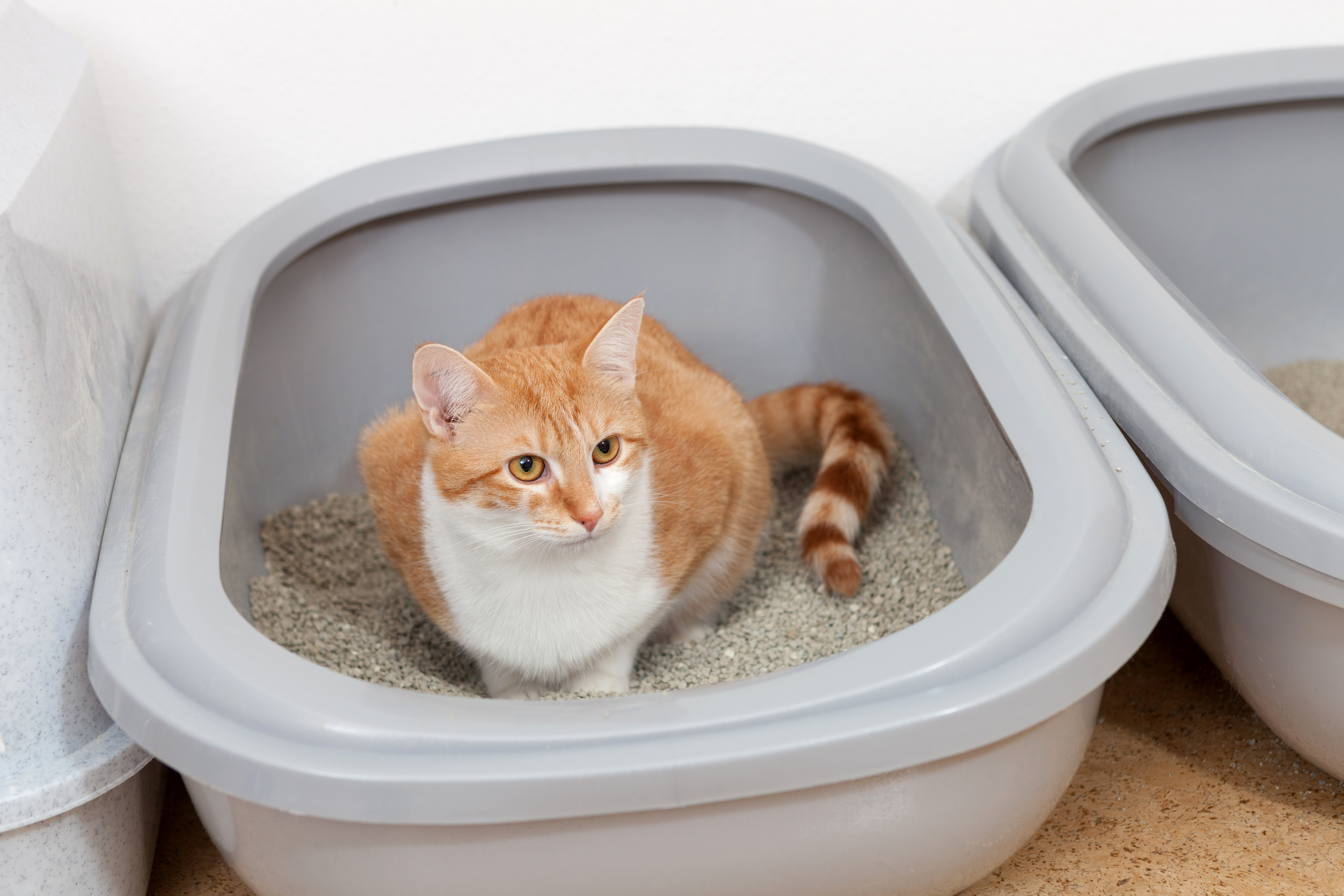 how to potty train a cat remedies