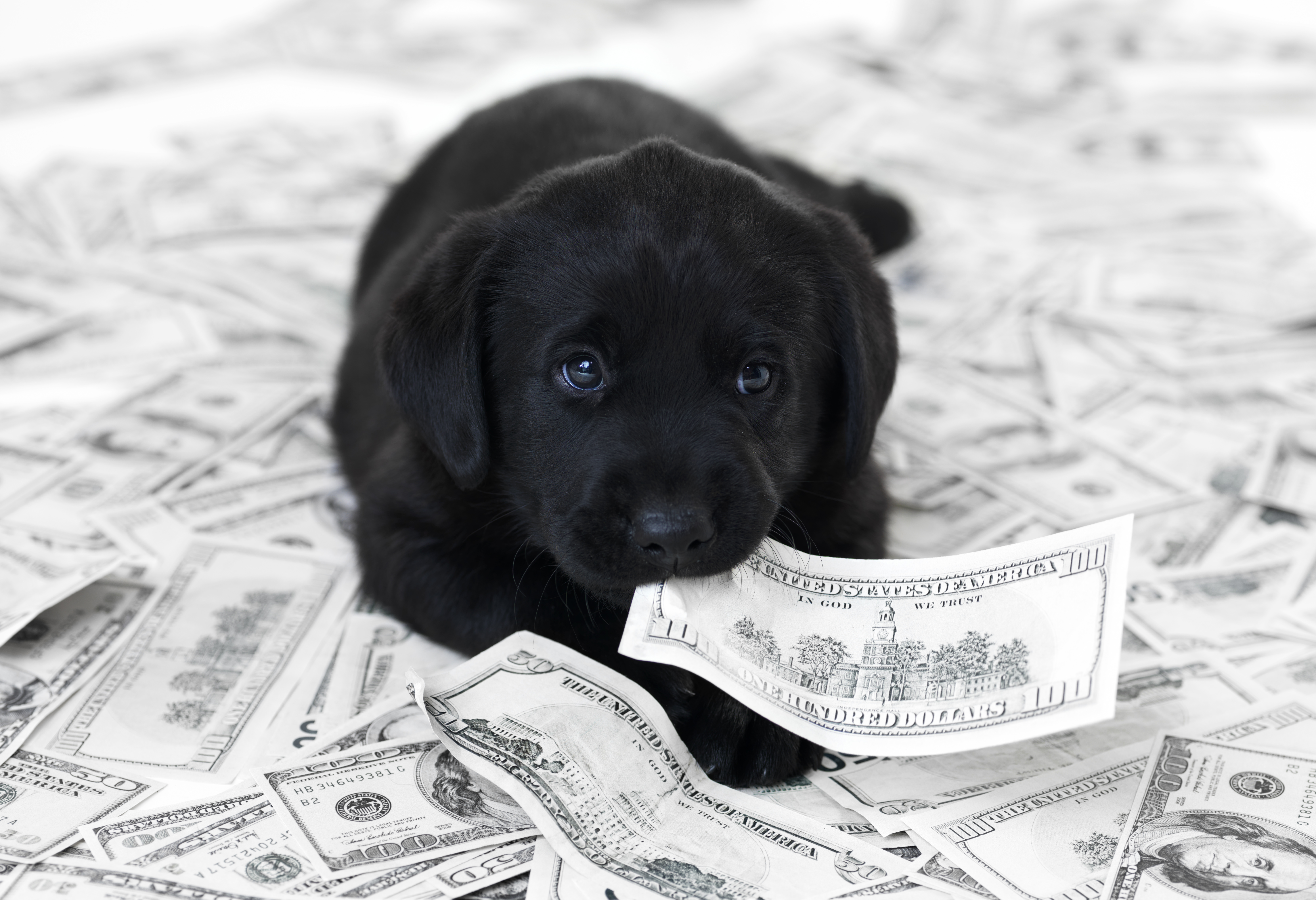 how to budget for a dog