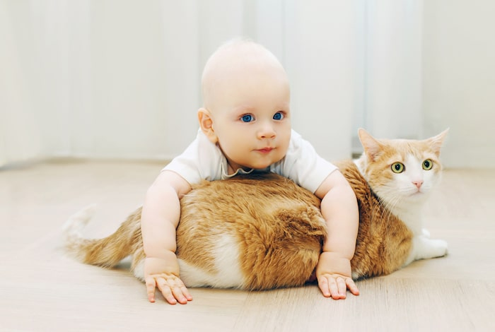 5 ways to introduce a new cat - How to Introduce a Baby to a Cat
