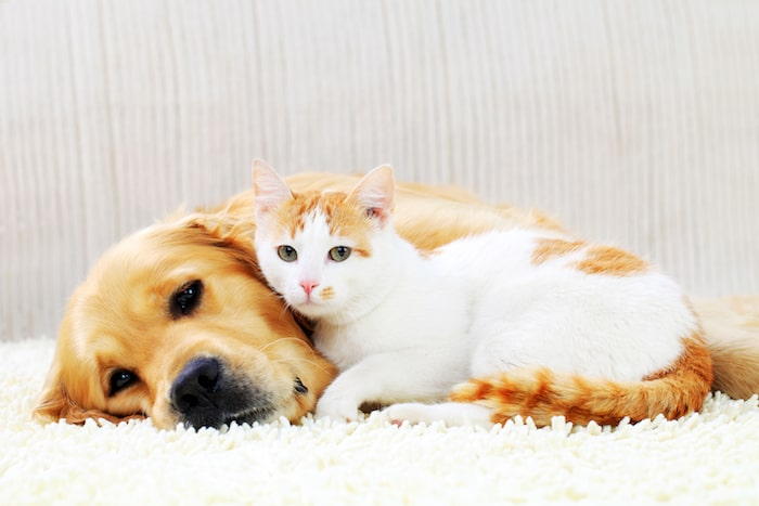 5 ways to introduce a new cat - How to Introduce a Dog to a Cat