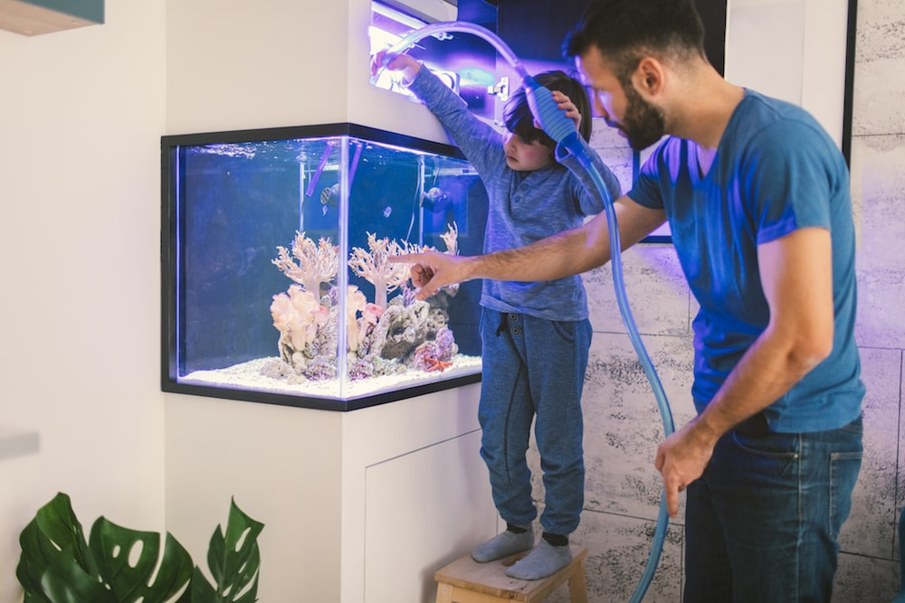how to take care of a fish clean tank