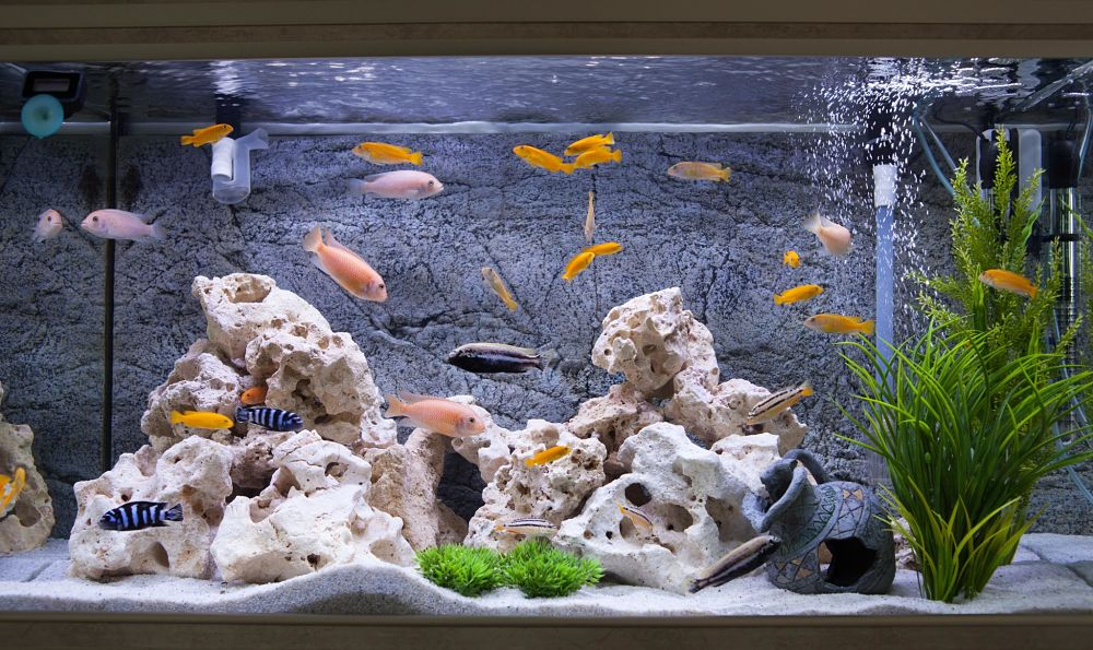 how to take care of a fish comfortable environment