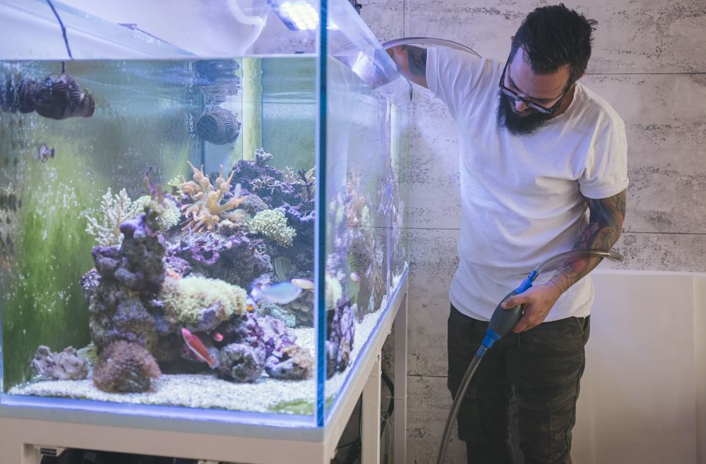 how to take care of a fish water