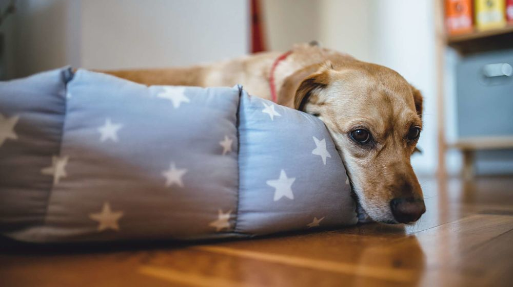 how to tell if your dog is sick poisoning