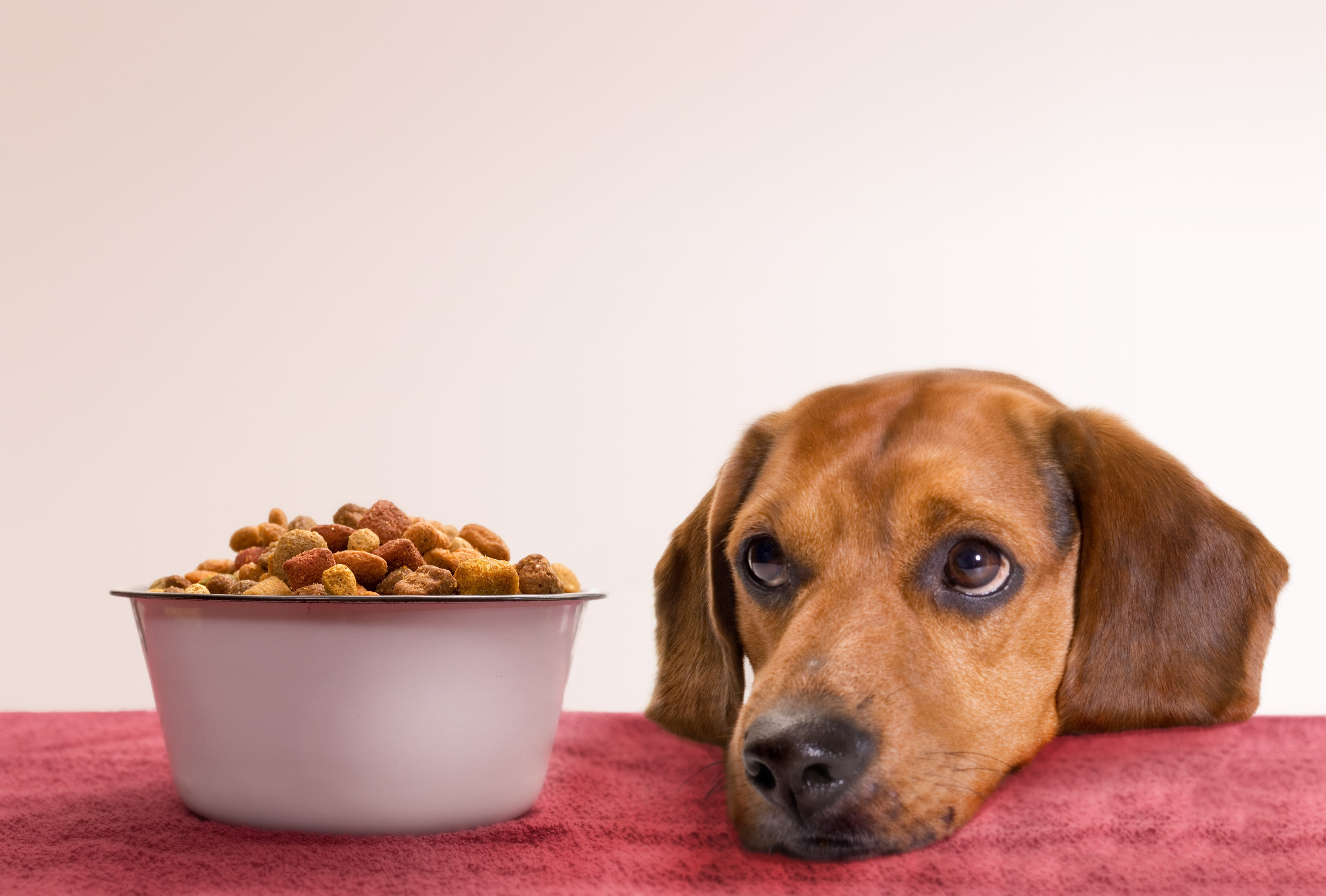 Control Diet - How To Potty Train Your Dog
