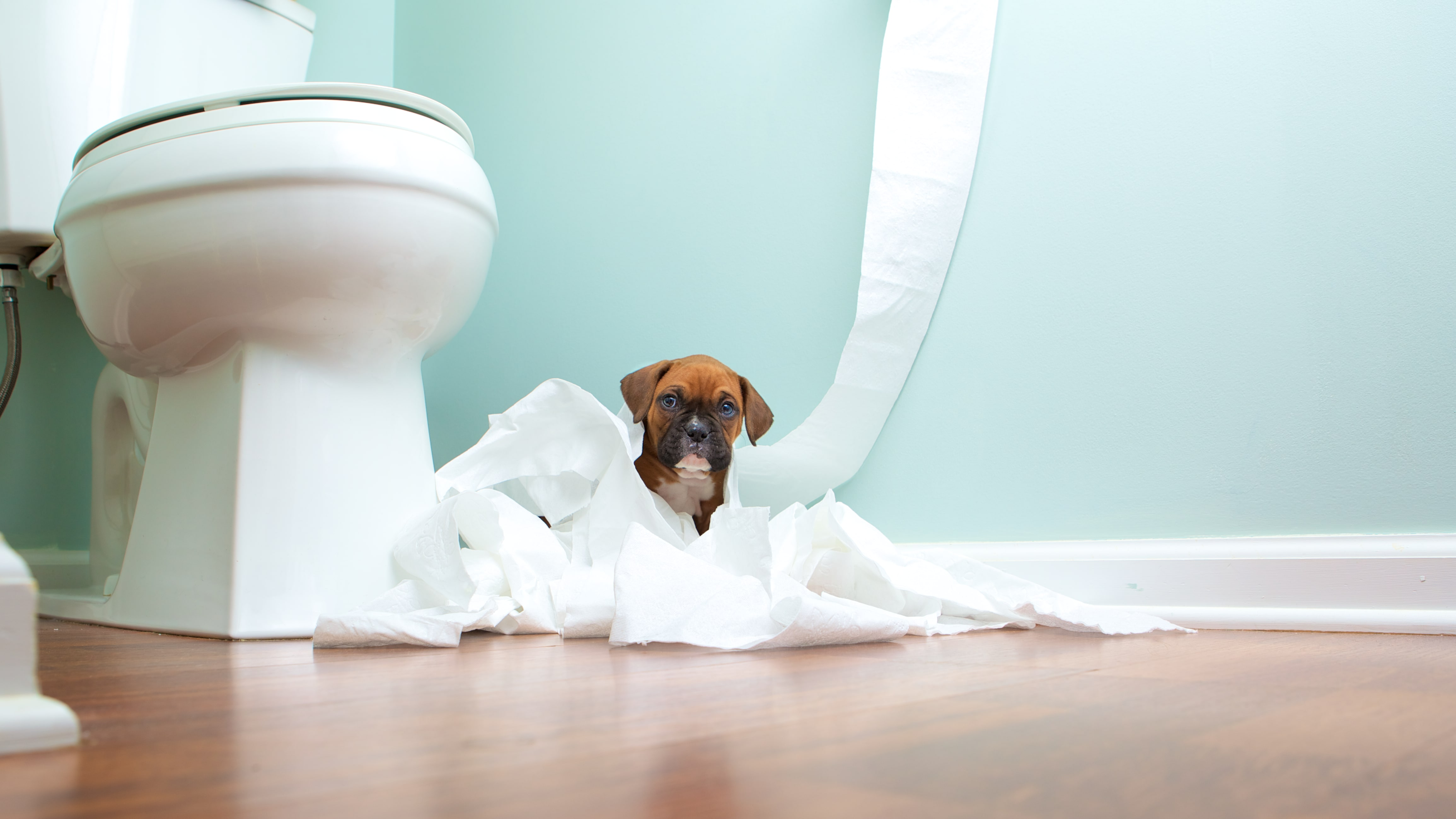 how to potty train a dog
