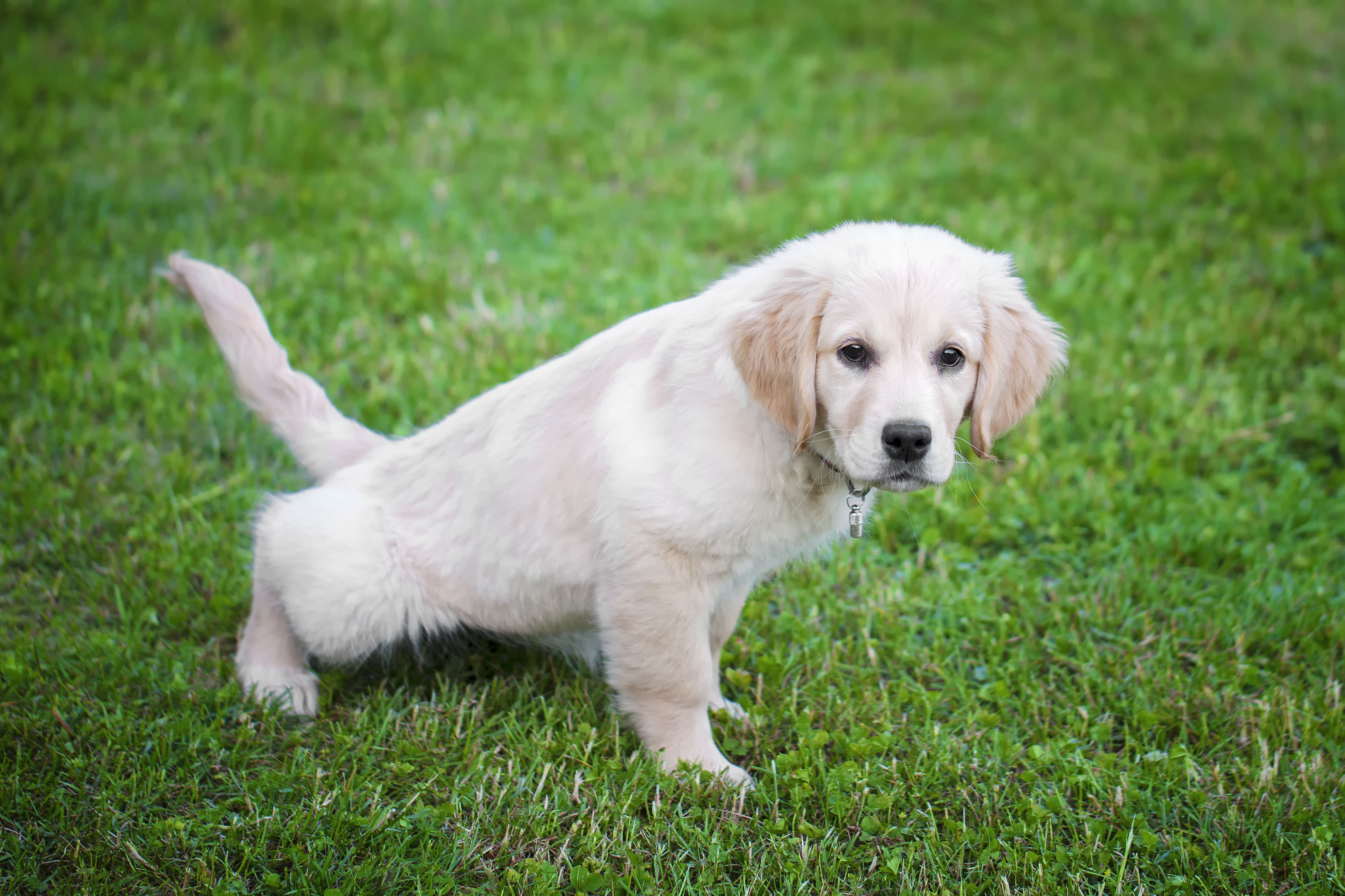 Consistent Schedule - How to Potty Train Your Dog