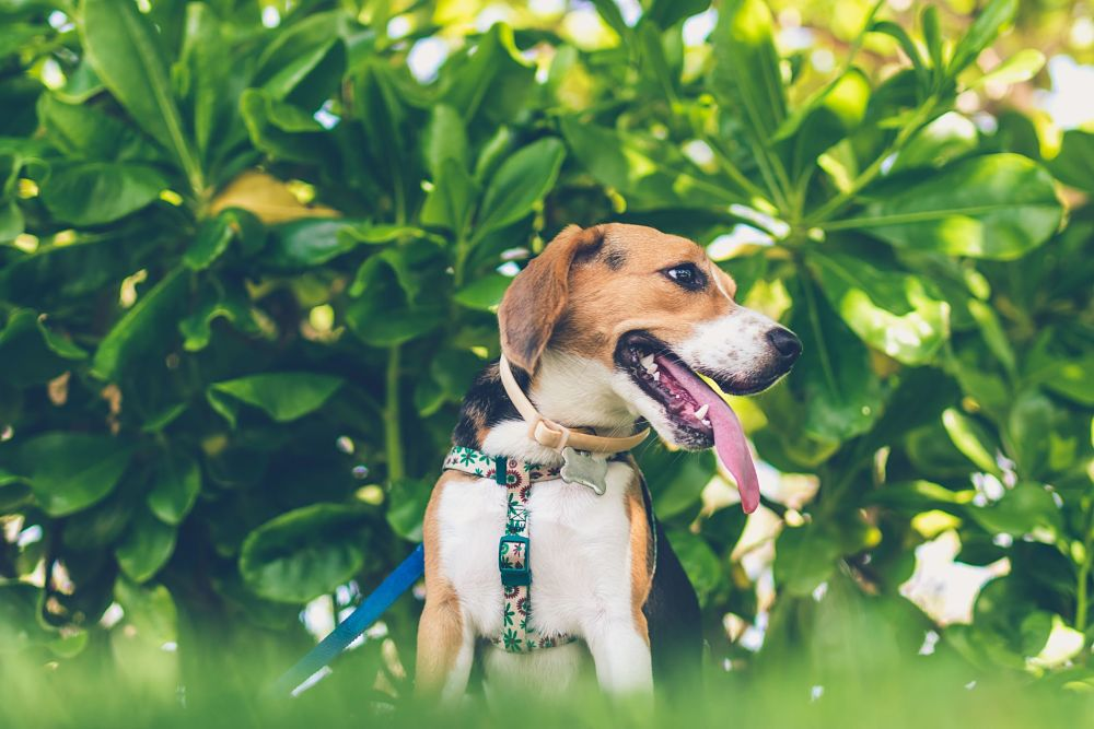 these are the worst dog breeds for cats beagle