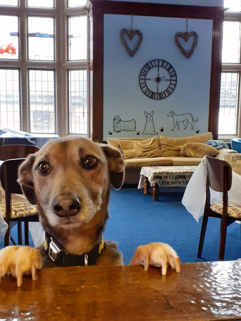 Toby, one of the Give a Dog a Bone companionship dogs, at the Alloa Hub