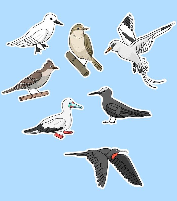 Aves de Noronha de cara nova!