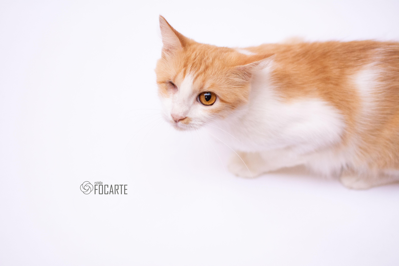 Cuidamos de gatinhos deficientes