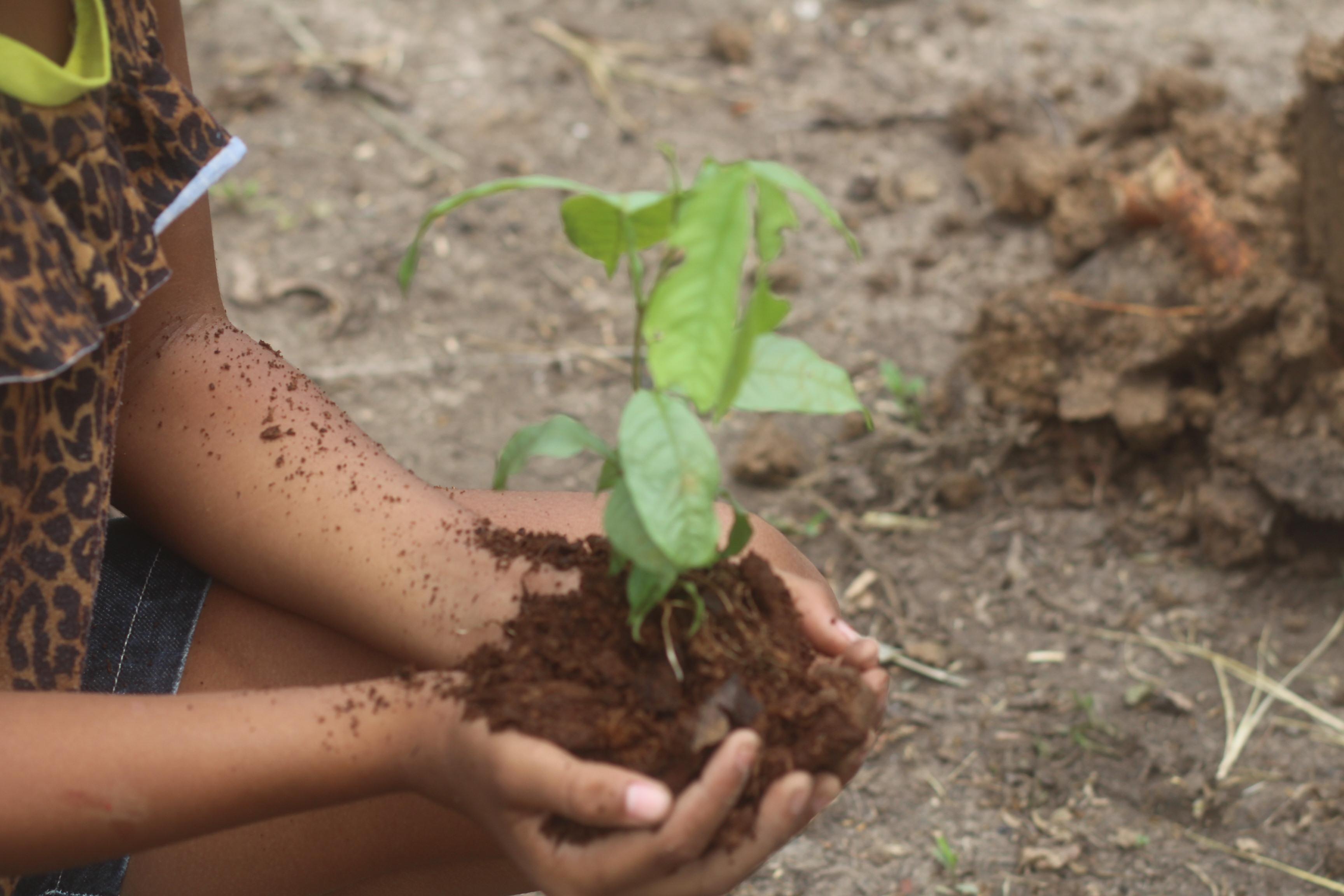 Seu apoio ajuda a plantar árvores