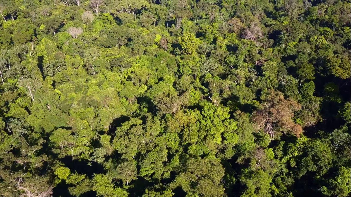 Contribuir para a conservação do meio ambiente com foco na Amazônia articulando diálogos, consensos e soluções inovadoras