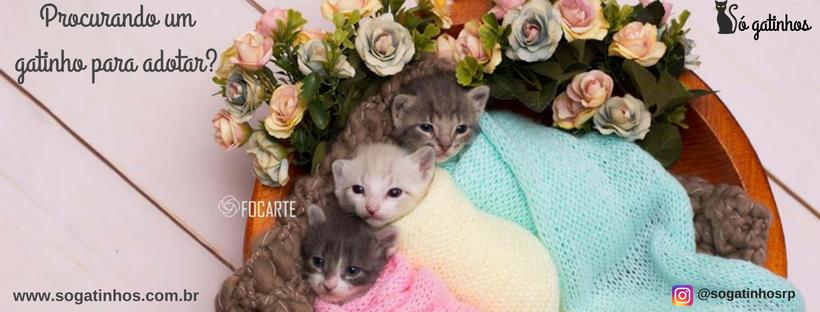 A Só Gatinhos abriga gatinhos abandonados e vítimas de maus tratos para oferecer a eles todo cuidado e carinho que merecem!!