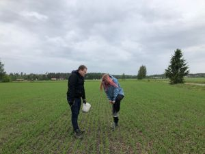 Kuvassa kaksi henkilöä ottavat pellolta maanäytettä.