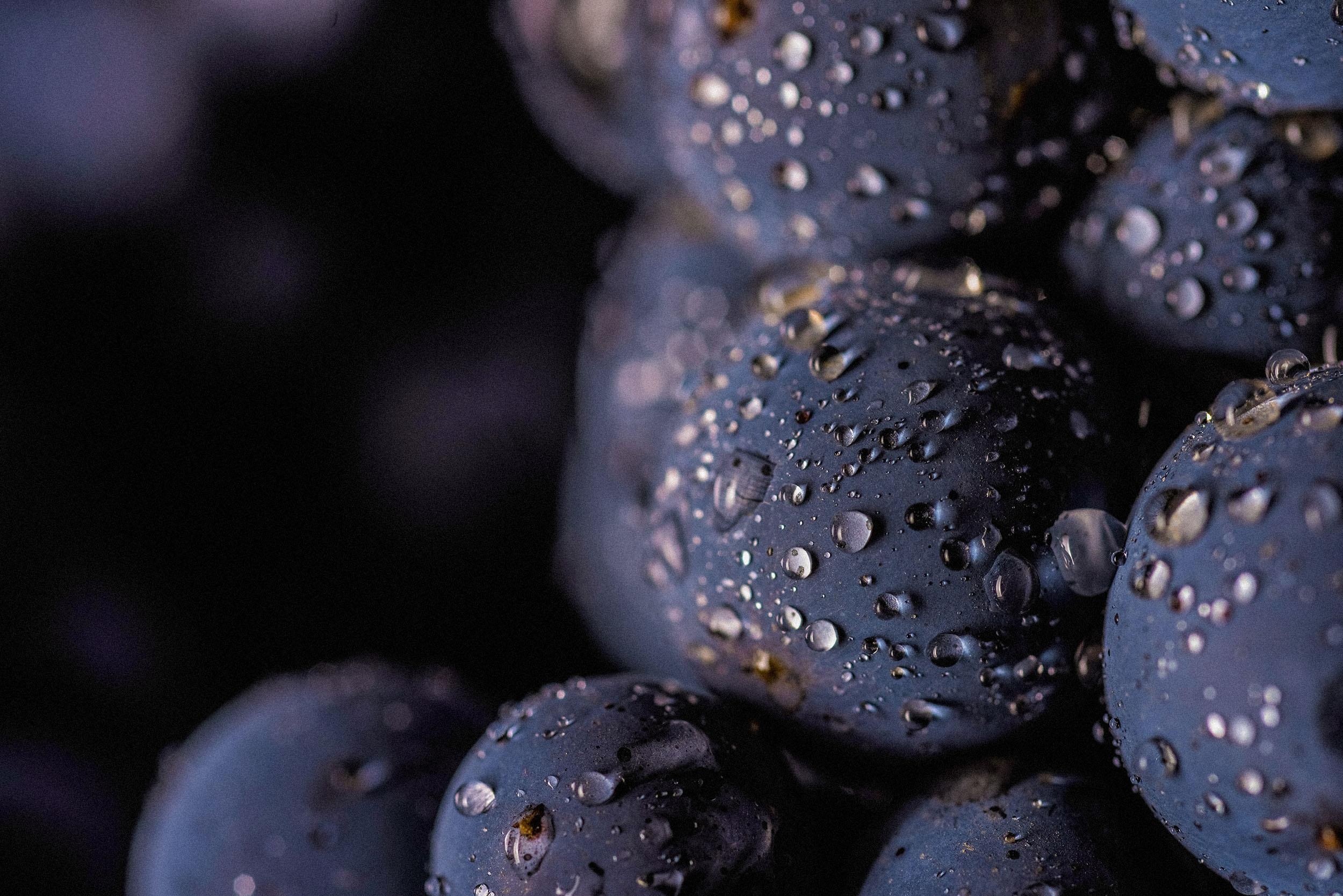 Gros plan sur sur une grappe de raisin