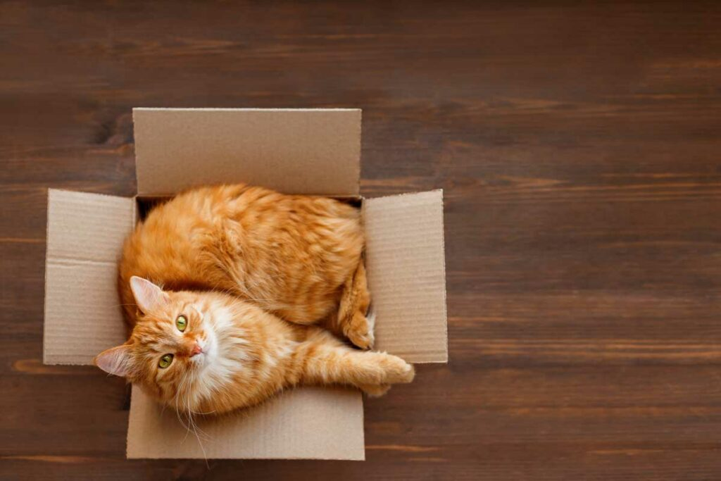 Cat inside moving box