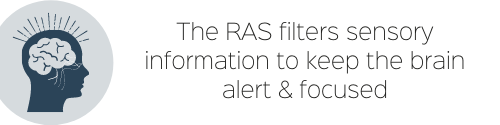 The RAS filters sensory information to keep the brain alert & focused