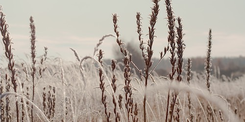 field of grass'