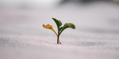 small plant with three leaves growing in sand