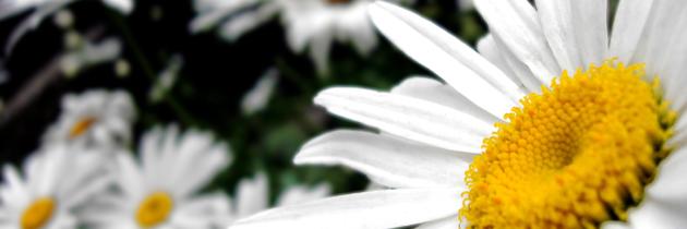 Olśniewający bukiet kwiatów