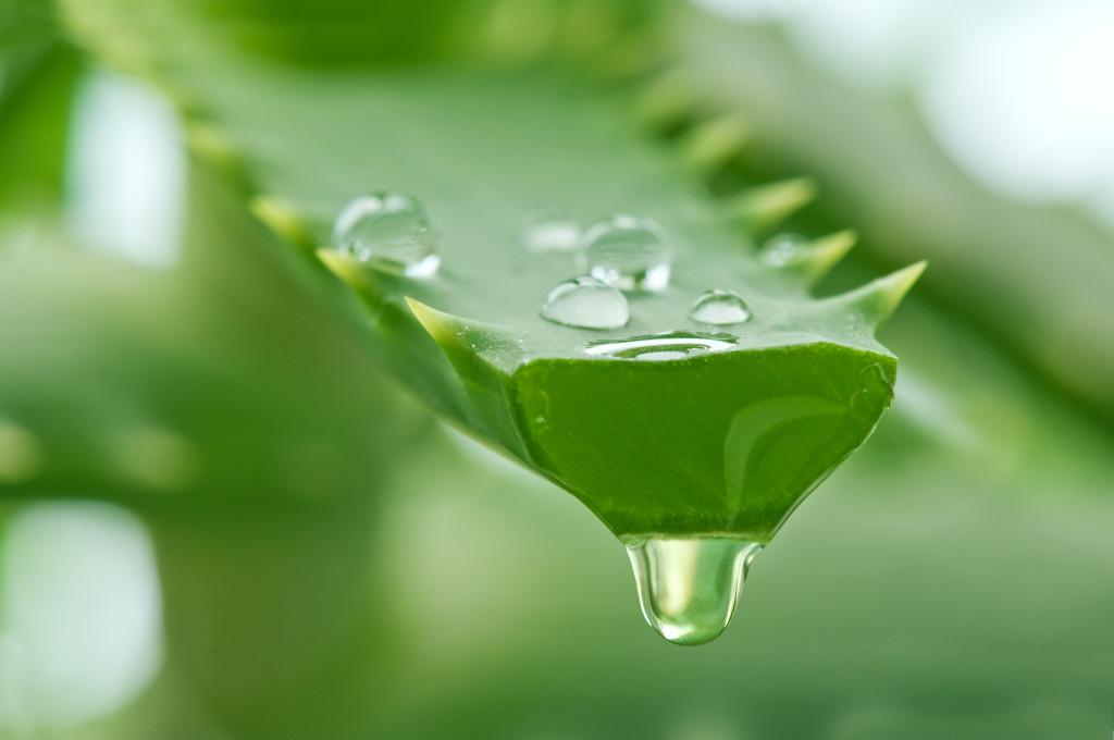 Najpopularniejsze rośliny w kosmetyce