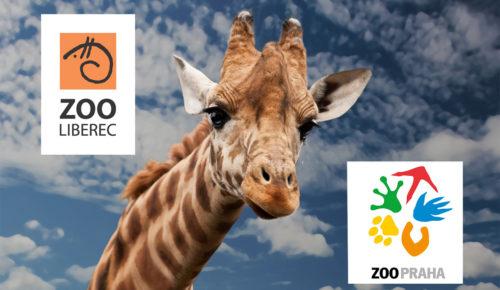 benefity-vstup-do-zoo-praha-liberec-500x290