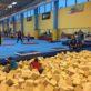 Gryfáci na gymnastice