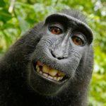 Opice nafotila selfie