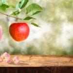 Zakousněte se do svůdného jablka Nina Ricci Nina