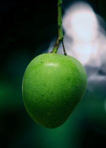 Zelené mango má až nečekané aroma