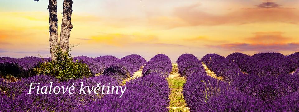Poznejte krásu vůně fialových květin