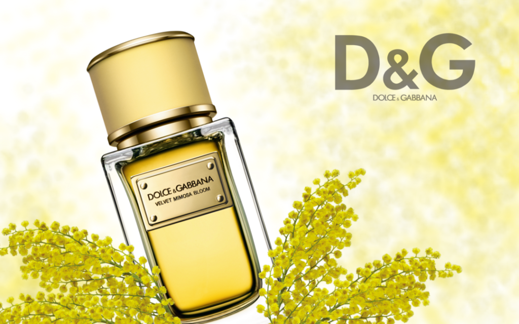 Objevte krásu Dolce & Gabbana Velvet Mimosa Bloom