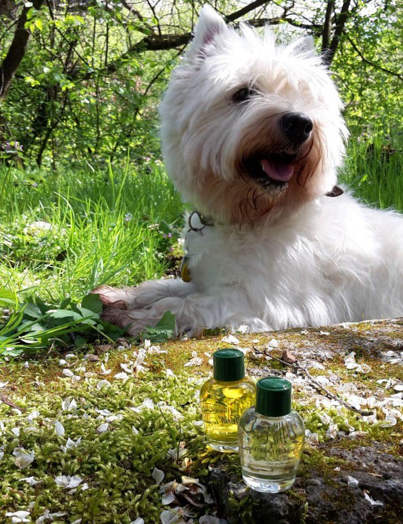 Moje predošlé voňavé nákupy - vanilkový a pižmový parfumovaný olej Frais Monde