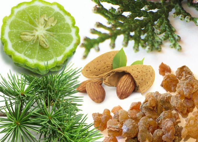 vône Sumerov - bergamot, cyprus, céder, mandle, myrha
