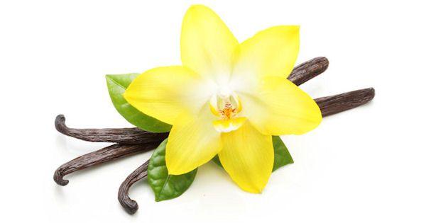 vanilka - jej kvet a struk