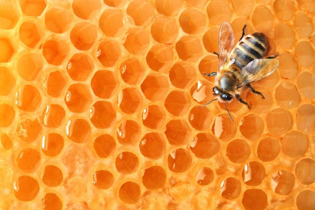 Včely a ich produkty sú cenným zdrojom výživy