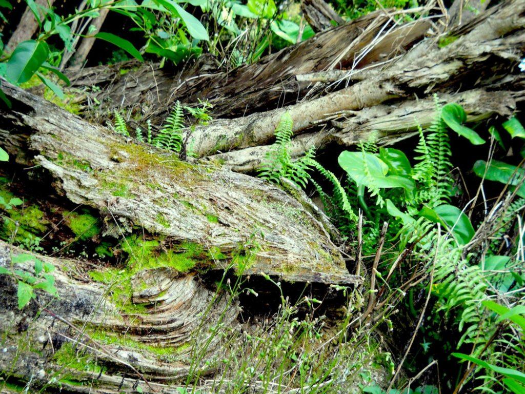 Najlepšie pánske parfumy (nielen) do lesa