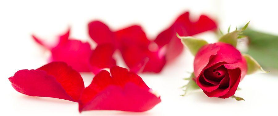Ruža, růže, rose, rosa - v každom jazyku je pomenovanie podobné