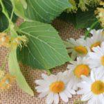lipový kvet a rumanček pre zlaté odlesky