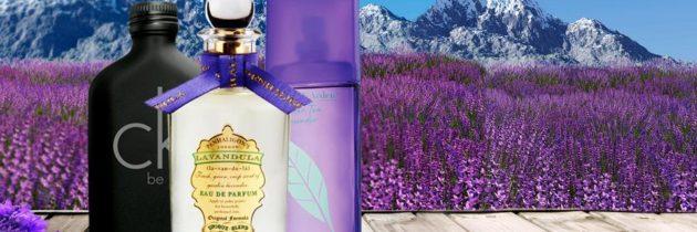Levanduľa – vôňa a relax v jednom