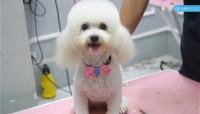 Chan Chan Pet