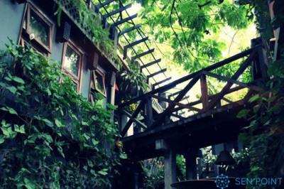 Café Vintage được cây xanh bao phủ