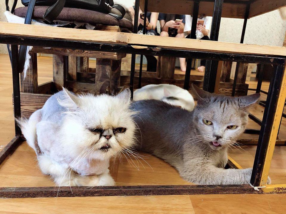 Cafe mèo Mon 3