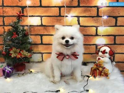 Chan Chan Pet - Tút tát vẻ đẹp cho thú cưng nhà bạn