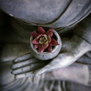 Albany/tonglen_meditation-360x360.jpg